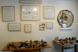 320_02_3902_petrified_wood_show_corner