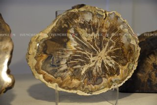 320_02_3903_petrified_wood