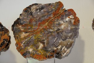 320_02_3904_petrified_wood
