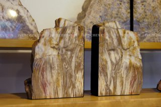 320_02_3908_petrified_wood